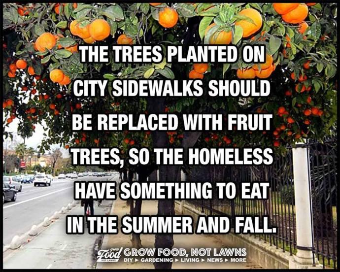 fruit tree street